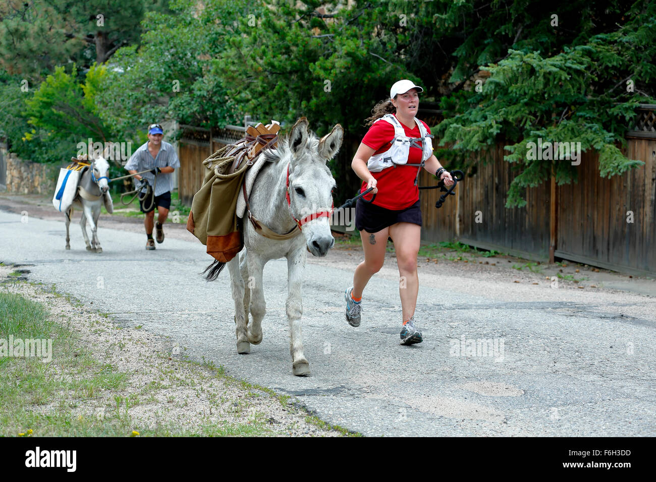 Runners and pack burros, Idaho Springs Tommyknockers Mining Days Festival and Pack Burro Race, Idaho Springs, Colorado - Stock Image
