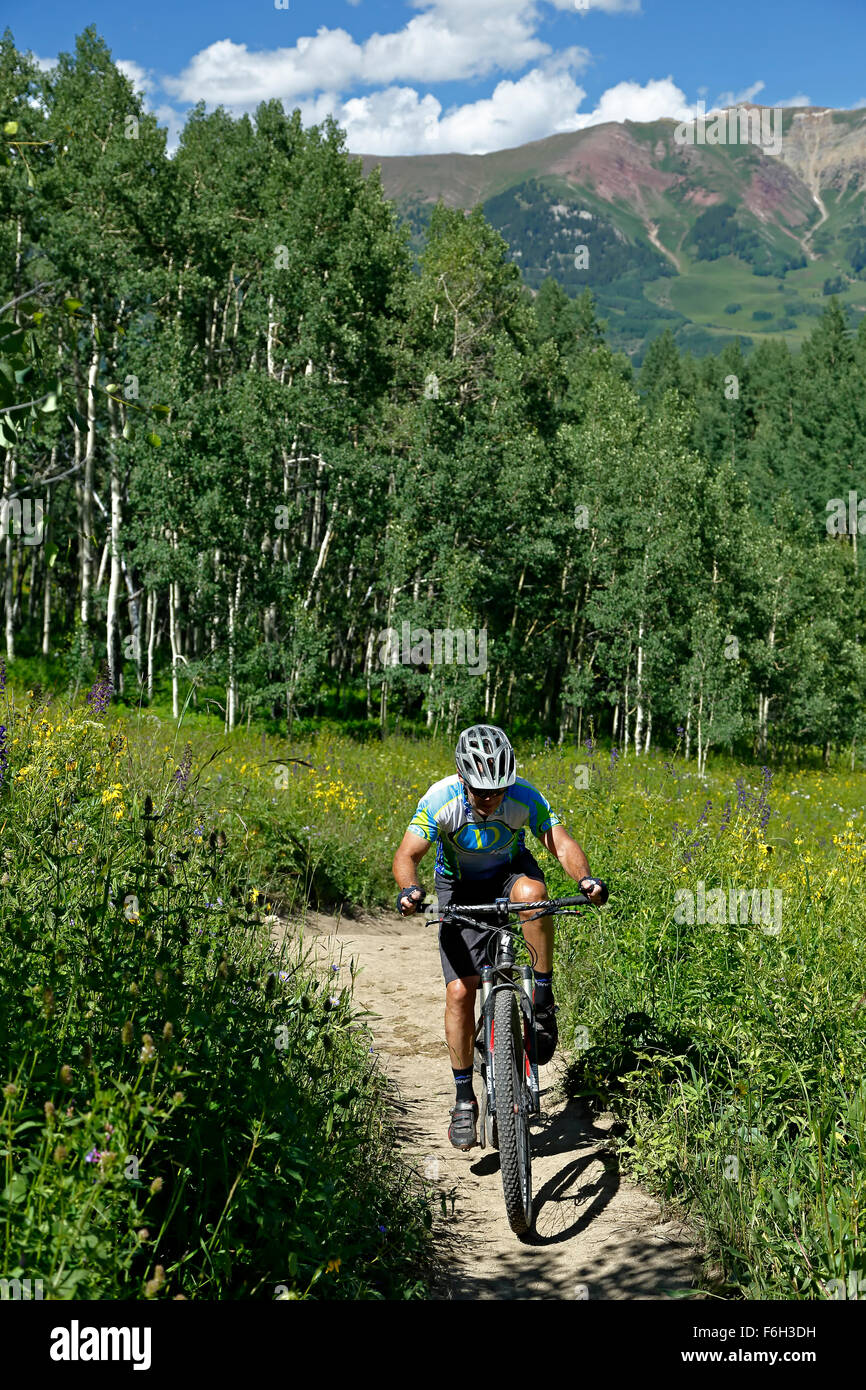 Mountain biker on trail near Crested Butte, Colorado USA - Stock Image