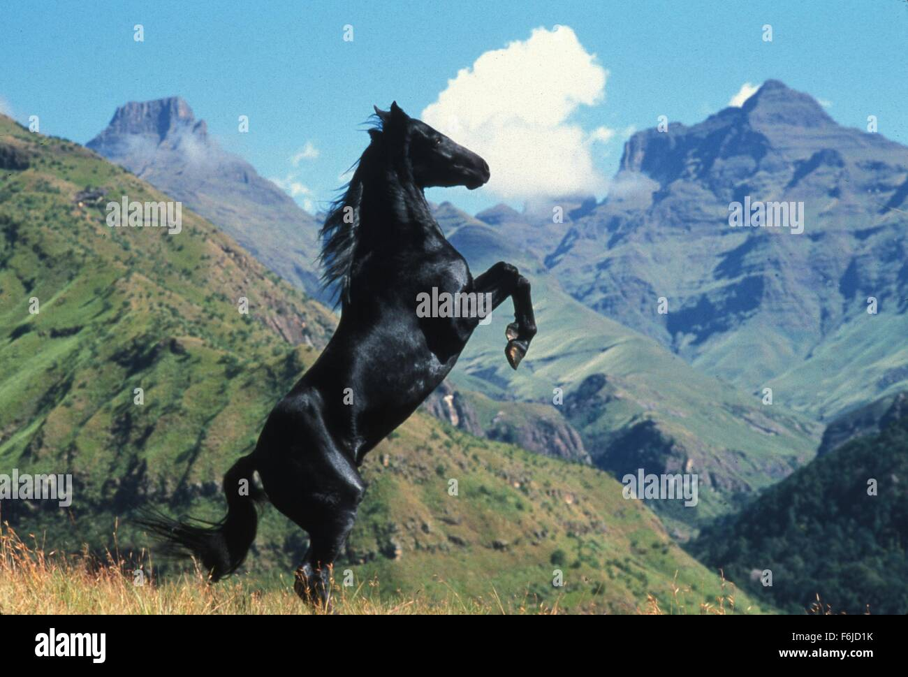 Jun 09, 2003; Hollywood, CA, USA; Scene from the family, adventure, drama ''The Young Black Stallion'' - Stock Image