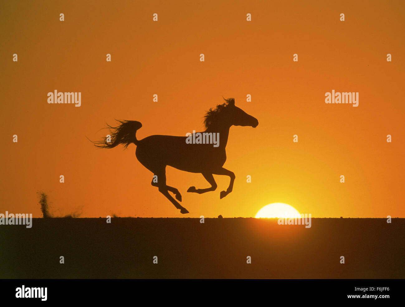 Dec 07, 2003; Hollywood, CA, USA; Scene from the Walt Disney Pictures family adventure, 'The Young Black Stallion.' - Stock Image