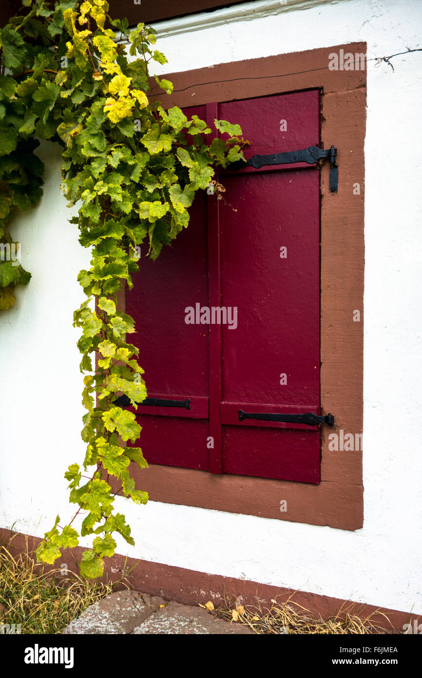 Vine tendril in front of a barn, Southern Germany Stock Photo