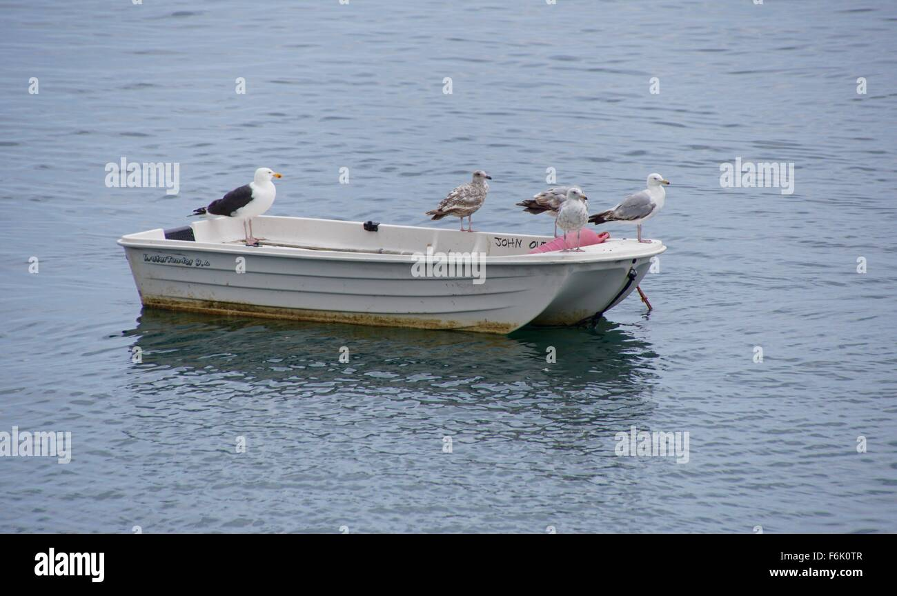 Herring Gulls standing on a rowing boat - Stock Image