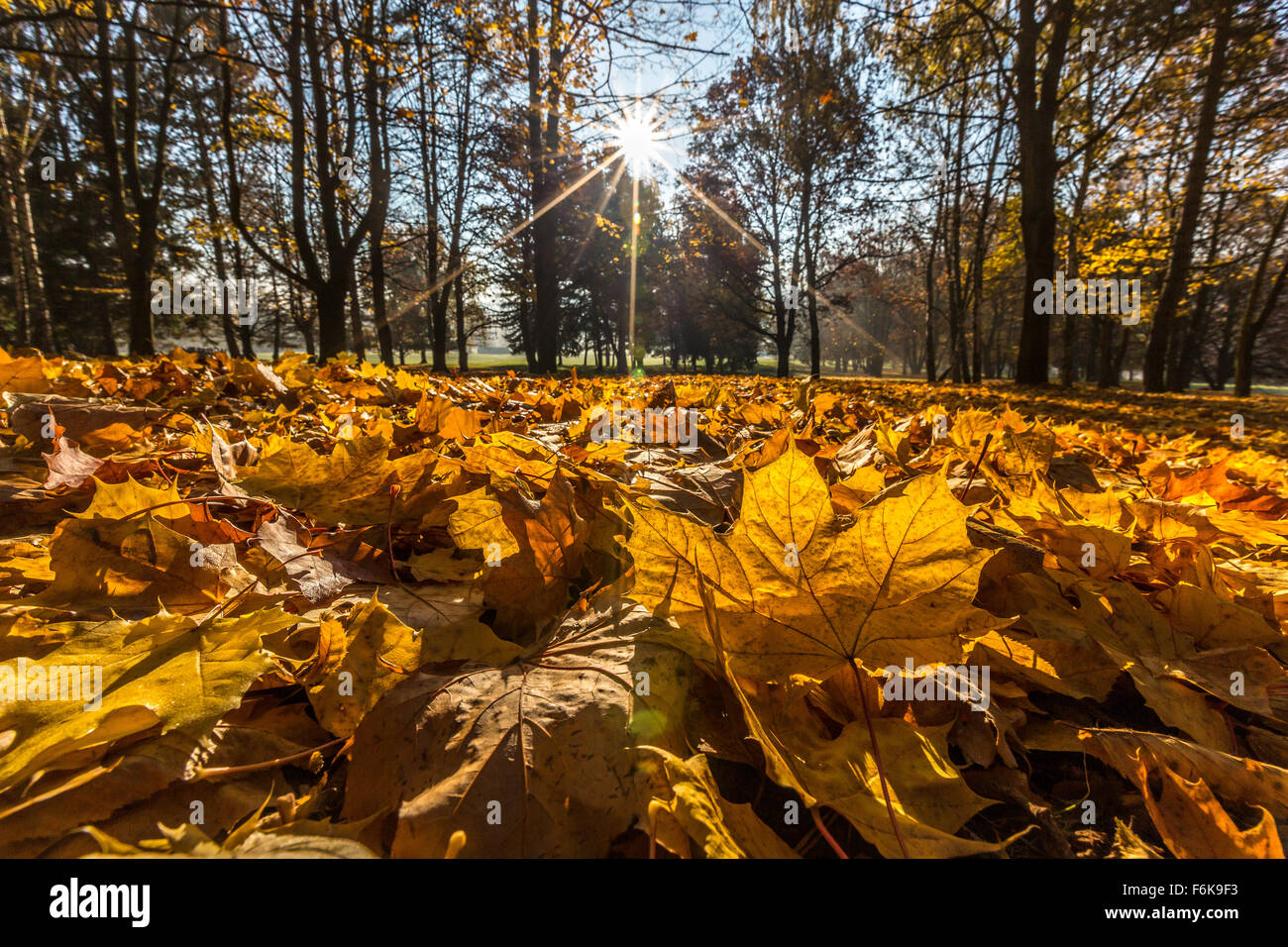 Autumn, leaves, sunshine, from below - Stock Image