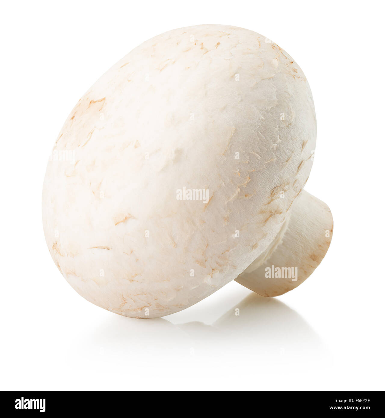 white mushroom isolated on the white background. - Stock Image