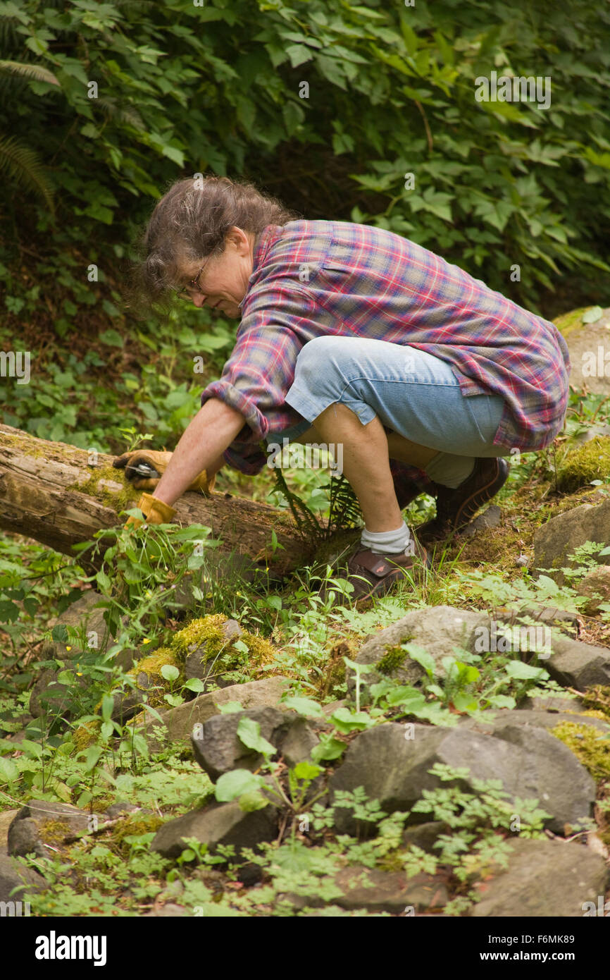 Woman pulling weeds in a shady area of her yard in Issaquah, Washington, USA - Stock Image