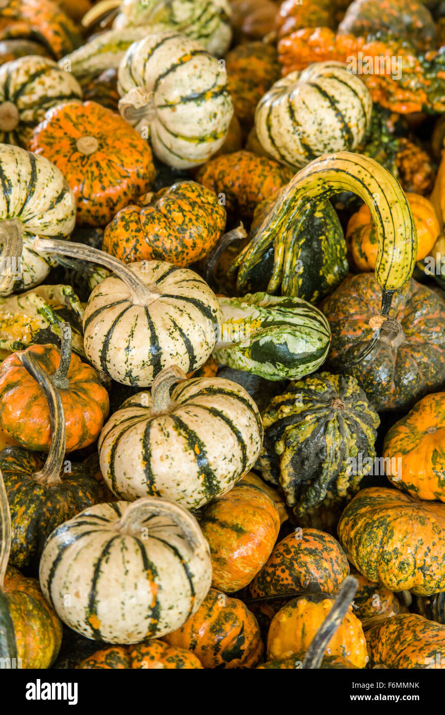 A Variety Of Small Pumpkins And Ornamental Gourds For Sale At Draper