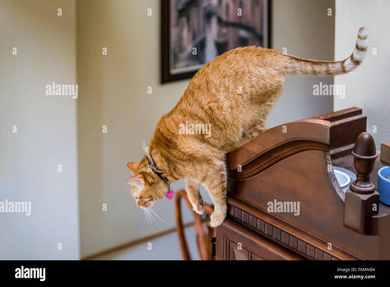 puma cat pictures