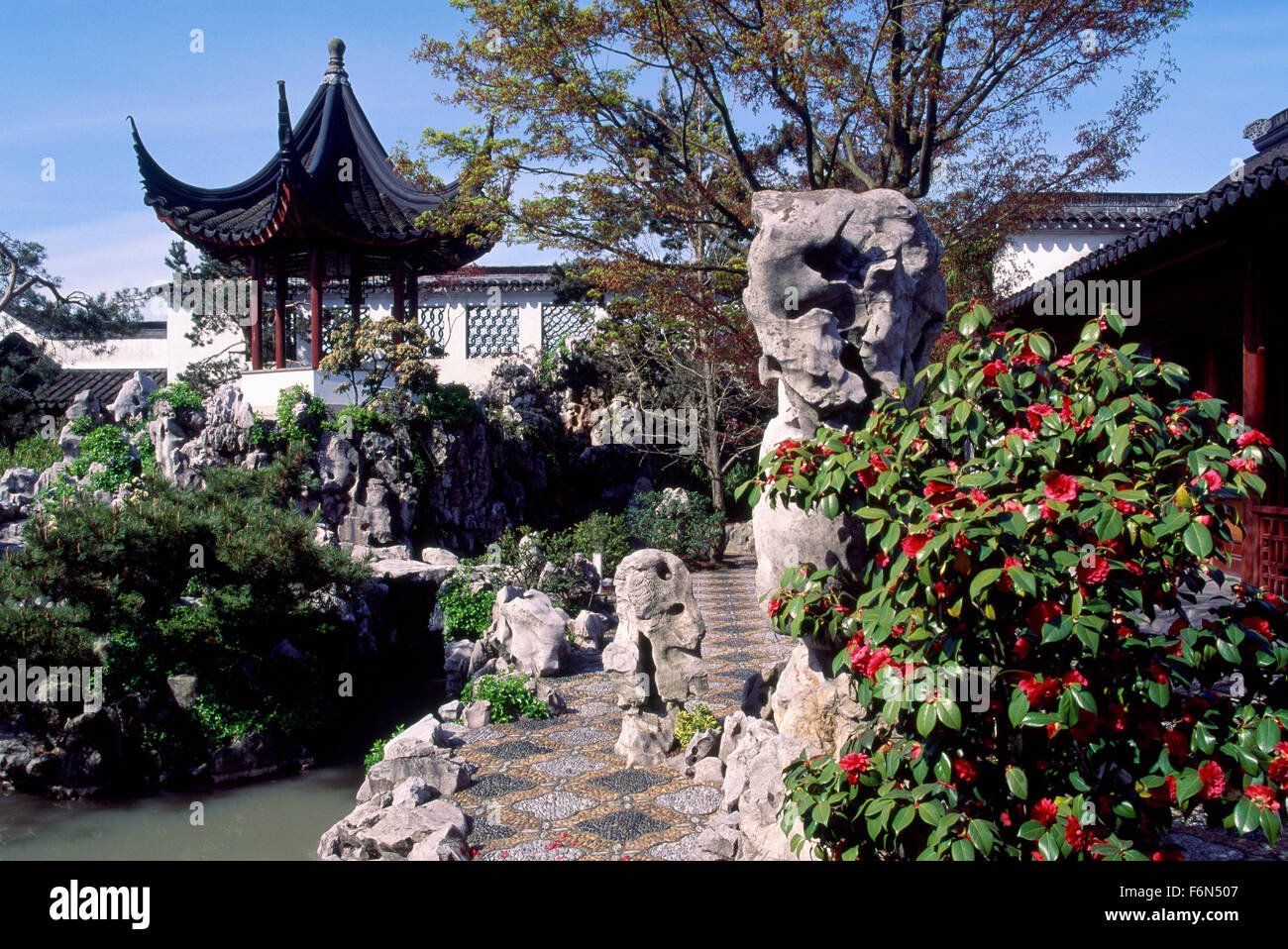 Beautiful Dr. Sun Yat Sen Classical Chinese Garden In Chinatown, Vancouver, BC,