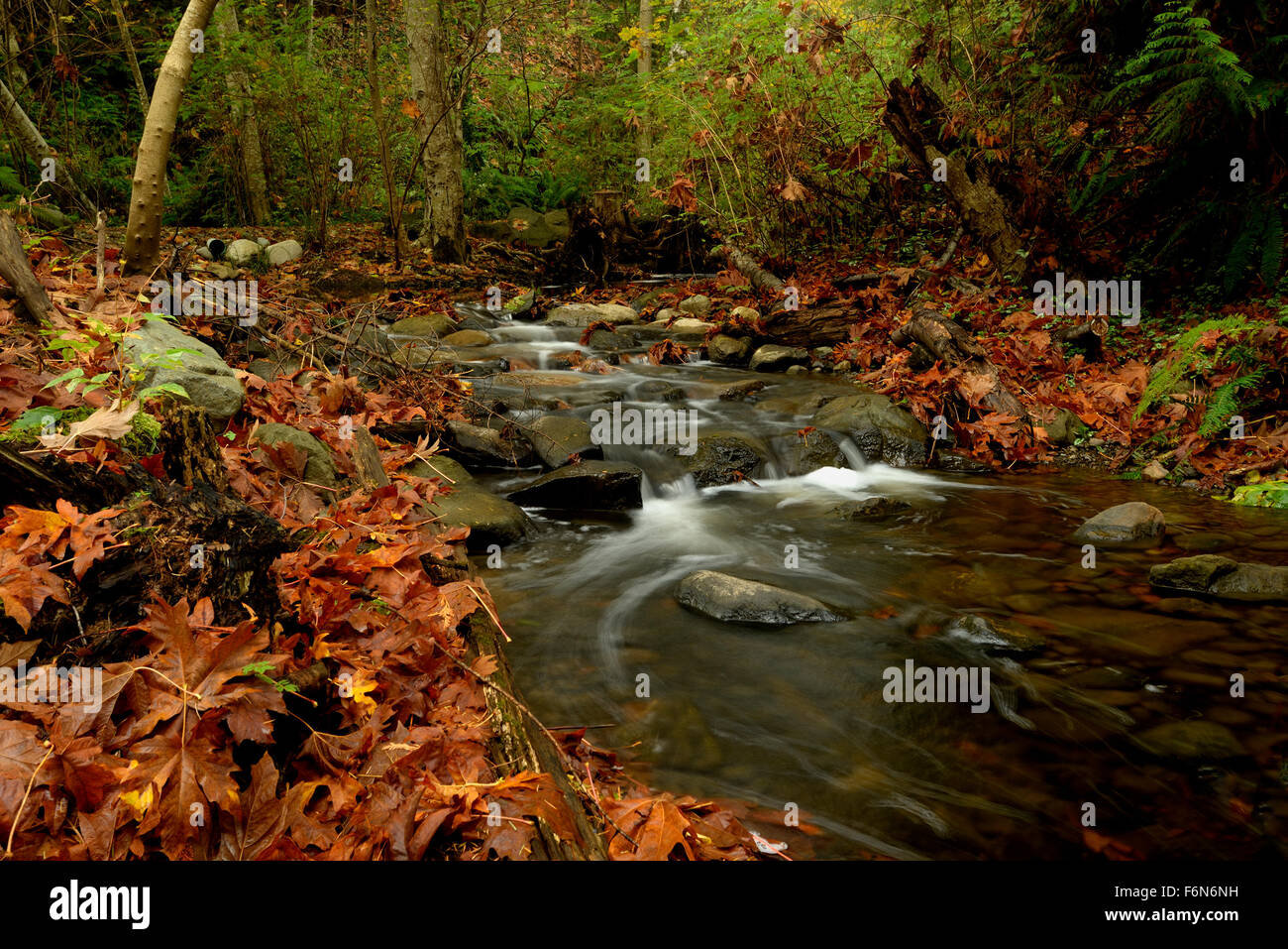 Salmon Bearing stream in the Fall, Autumn. - Stock Image