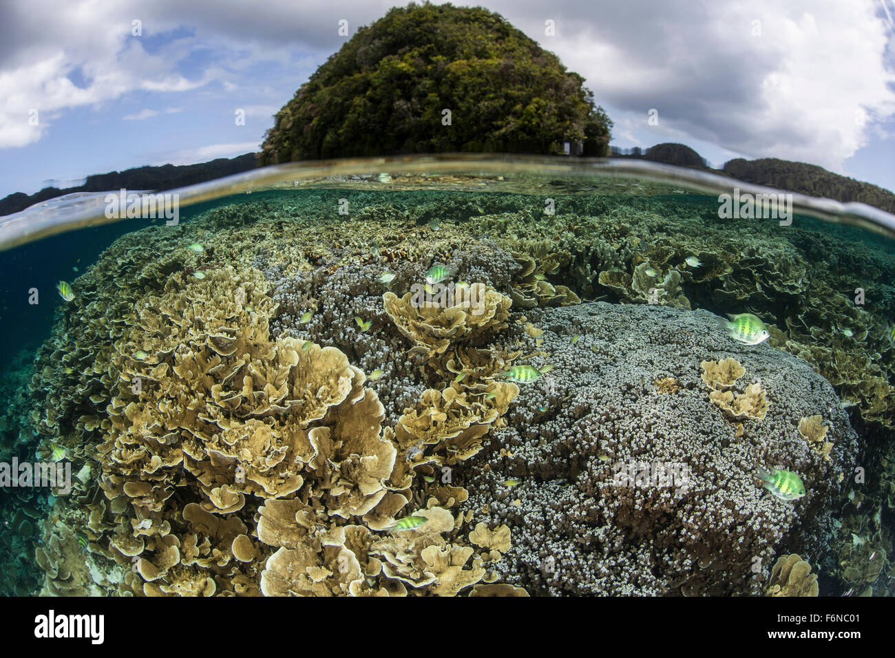 Reef-building corals grow inside Palau's lagoon which is studded with limestone islands. This Micronesian destination - Stock Image