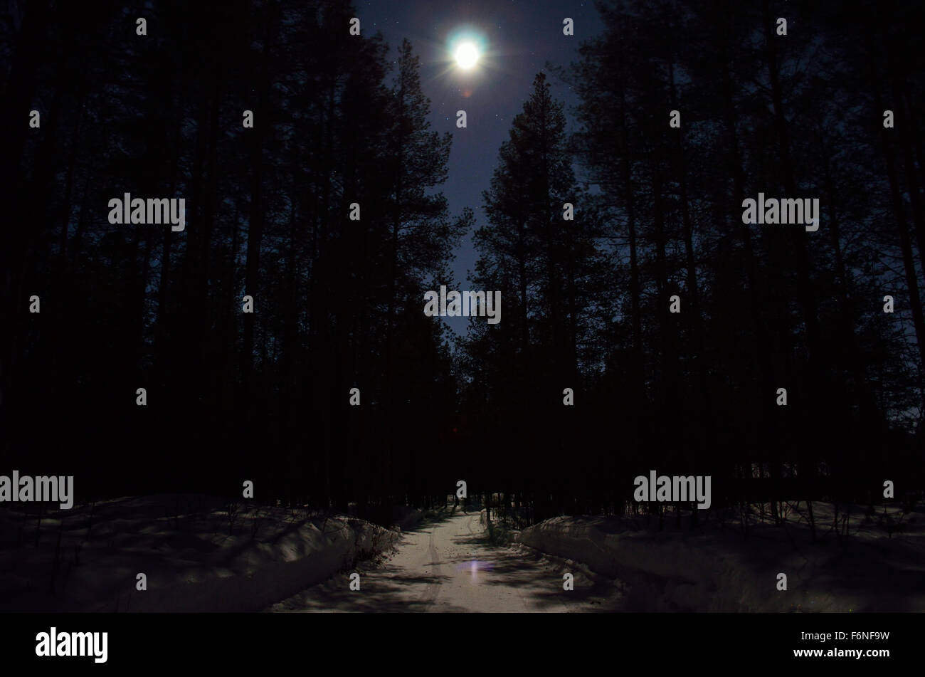 dark pine tree forest and winter road illuminated by full moon light Stock Photo