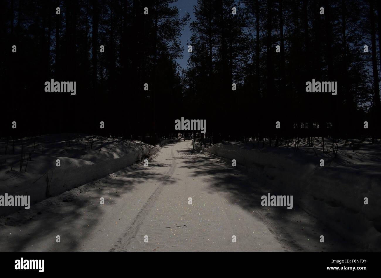 dark winter forest stock photo 90212807 alamy