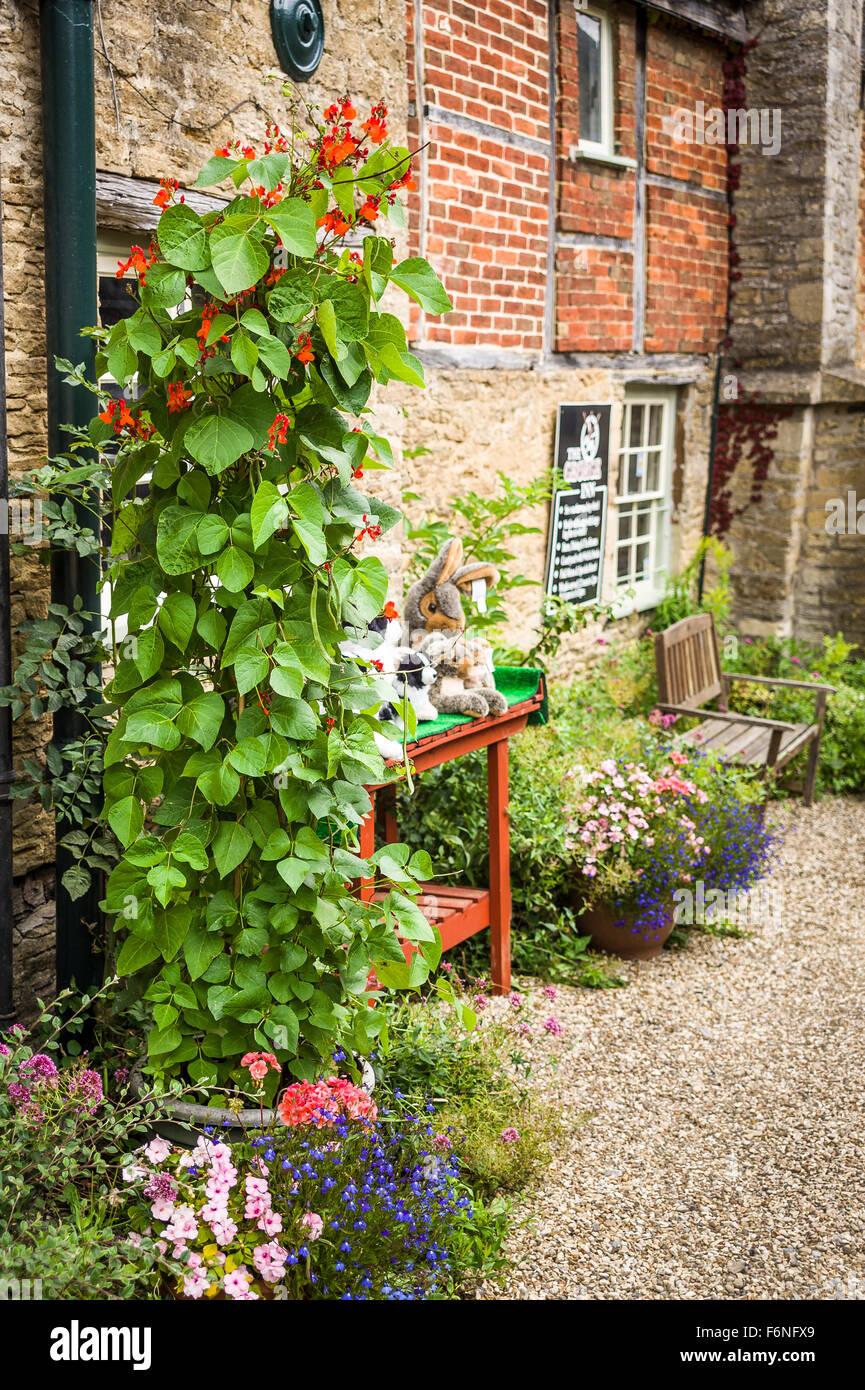 Climbing runner bean plants in a small courtyard garden in UK - Stock Image