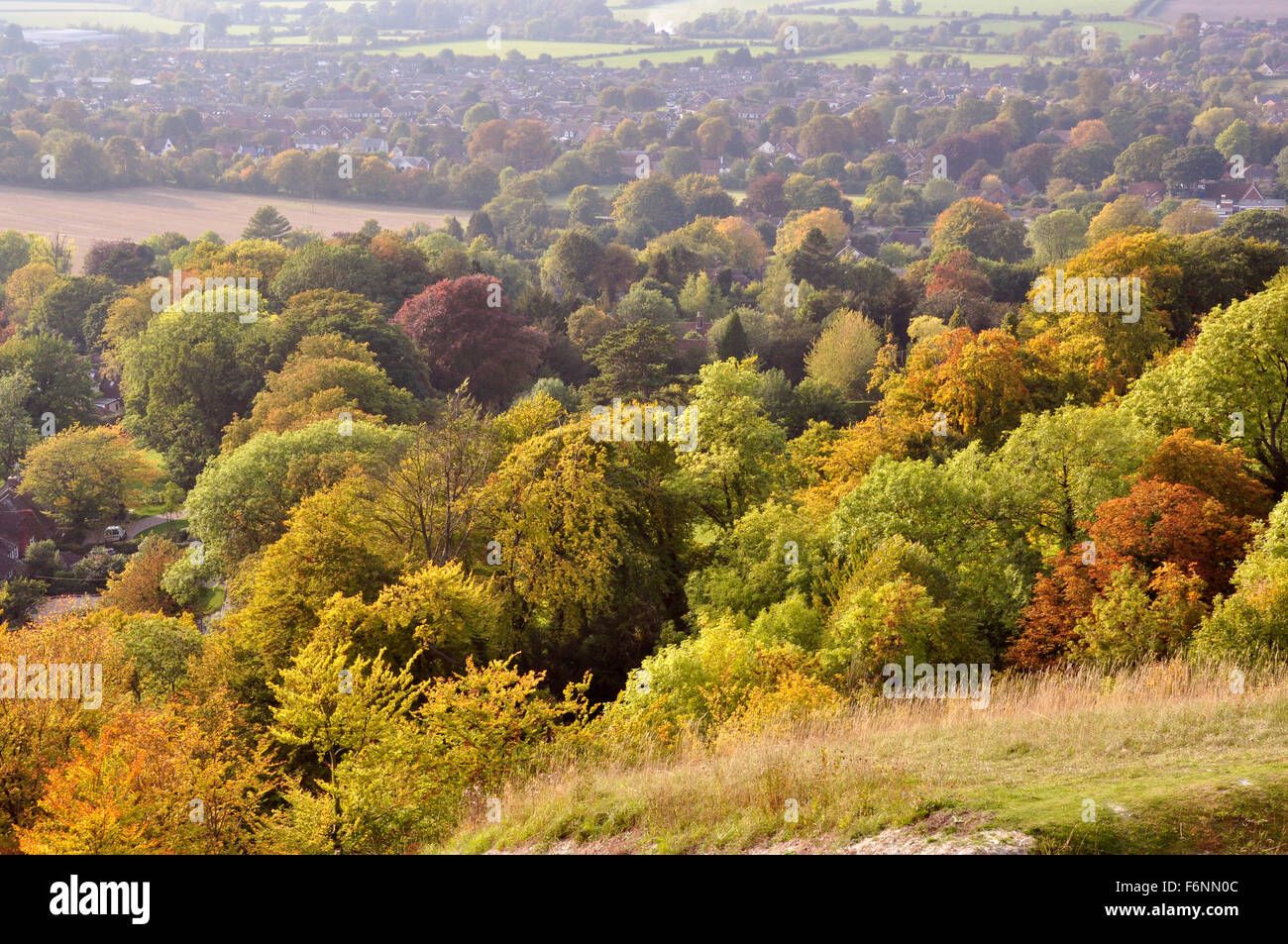 Chiltern Hills - on Whiteleaf hill - view over the many shades of autumn in the trees below - sunlight - distant - Stock Image