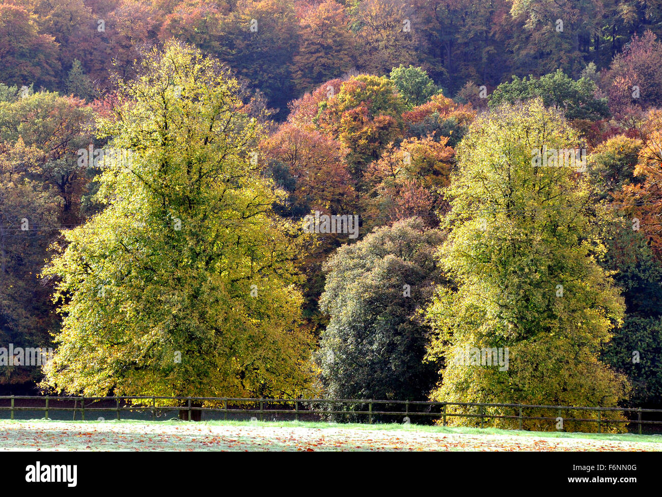 Bucks - Chiltern Hills - view - many shades of autumn in the trees - russet - brown - greens - slanting sunlight - Stock Image
