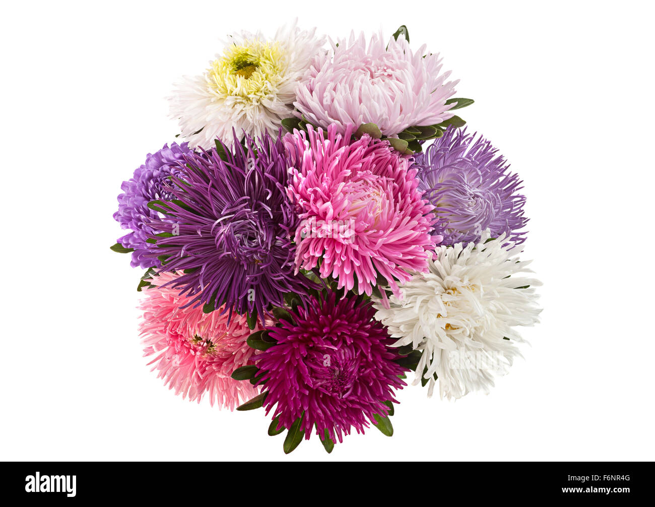 Aster flower bouquet closeup isolated on white background stock aster flower bouquet closeup isolated on white background izmirmasajfo