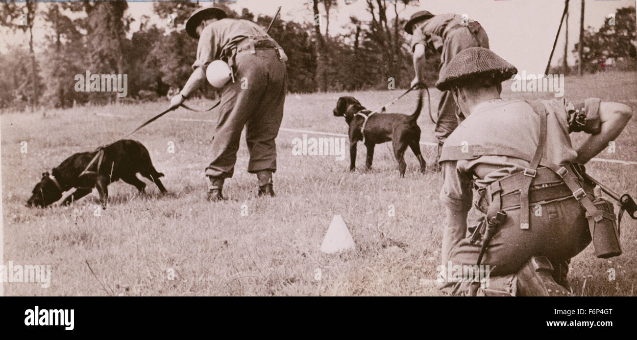 755. British Army land-mine clearance team dogs at training. - Stock Image