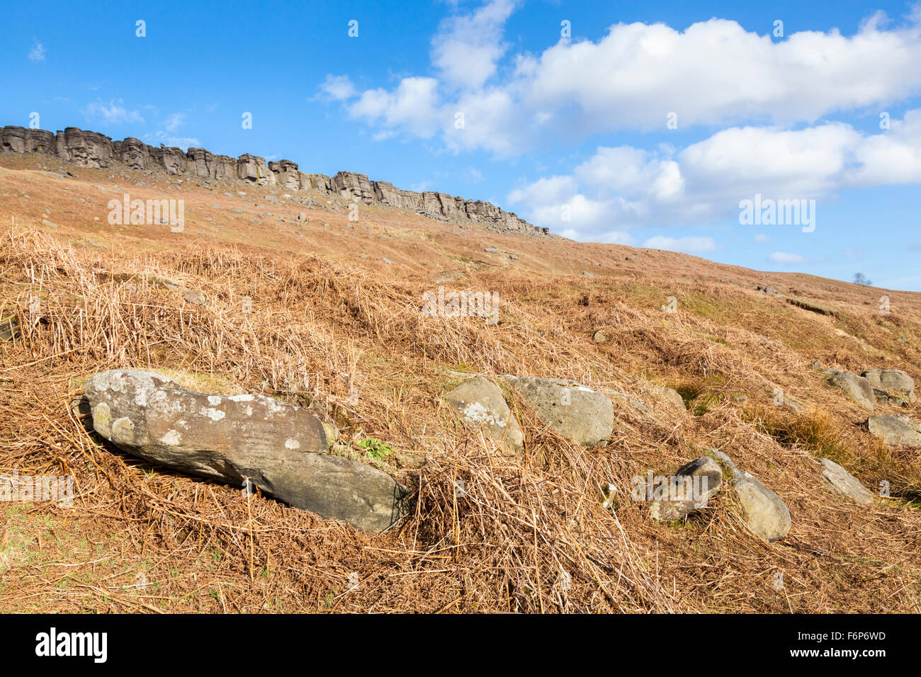 A hillside of dead bracken on Cattis-side Moor with Stanage Edge in the distance. Derbyshire, Peak District, England, - Stock Image