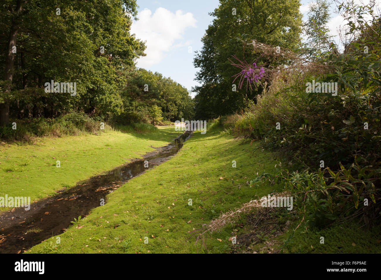 Basingstoke Canal During the 2009 Drought -3 - Stock Image