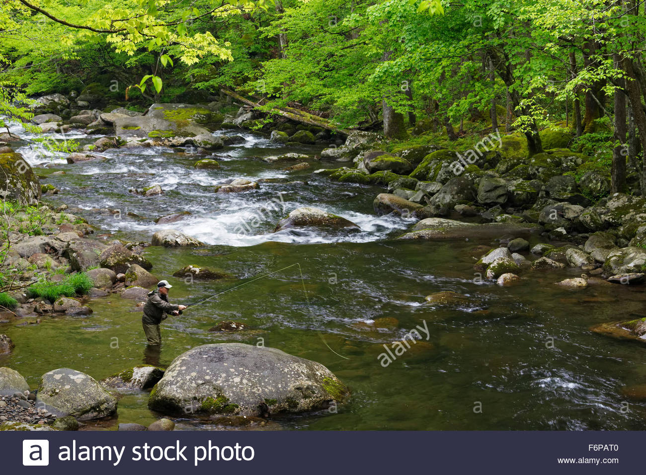 Man Fly Fishing in the Middle Prong Little River, Great Smoky Mountains National Park, Tennessee. - Stock Image