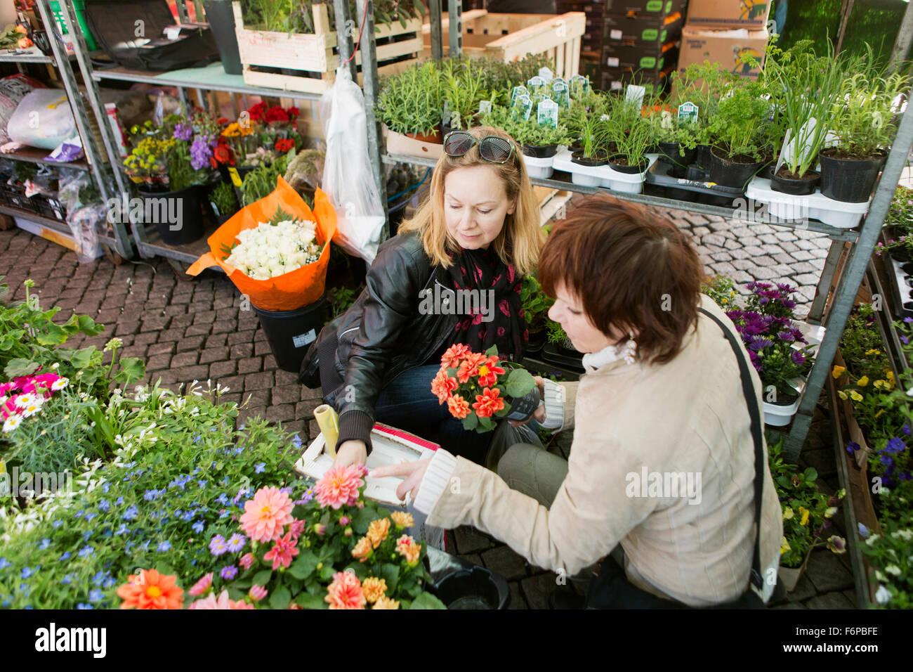 Mature women buying flower plants in nursery - Stock Image