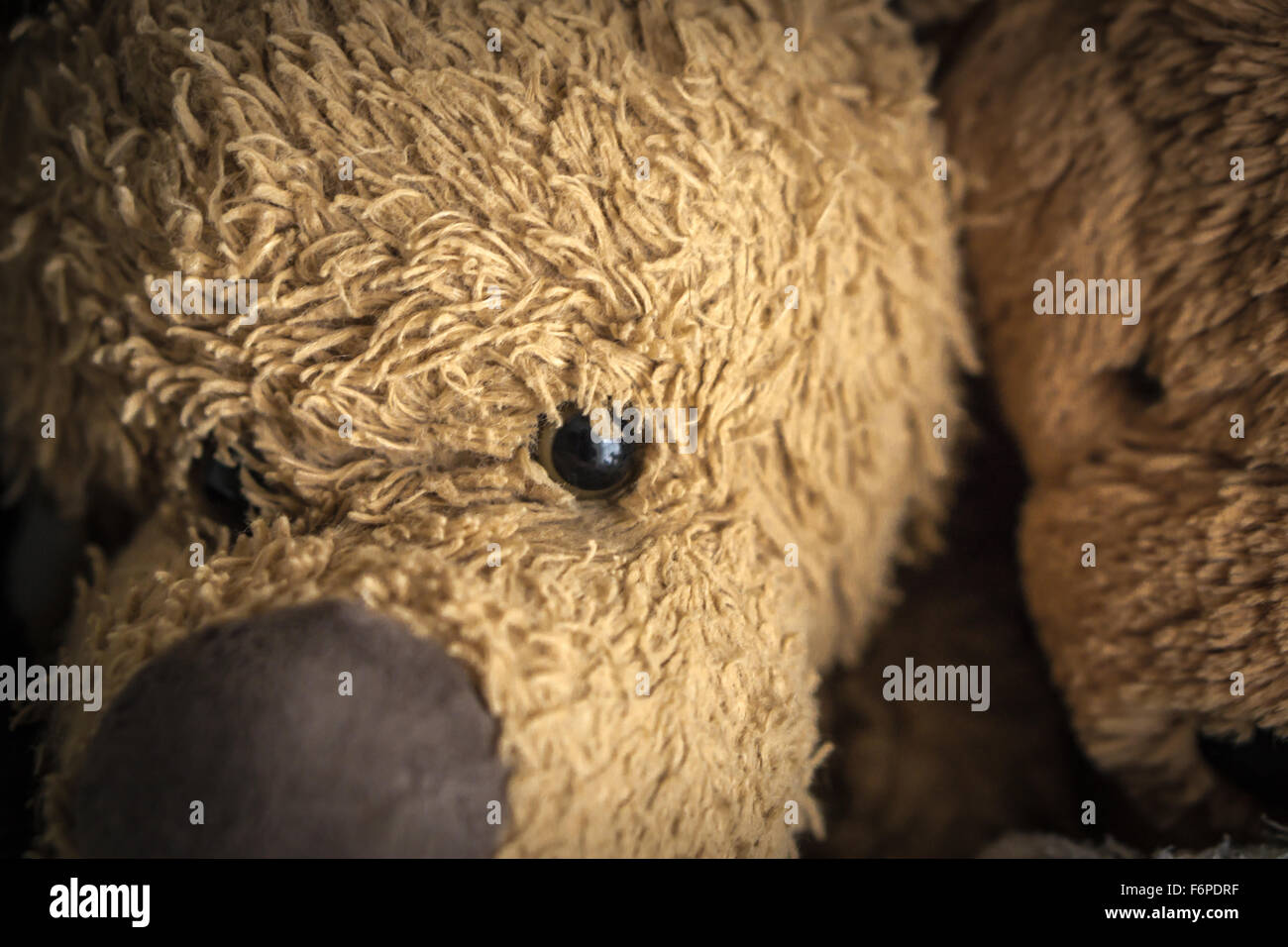 Close up of faces of two cuddly toys. Stock Photo