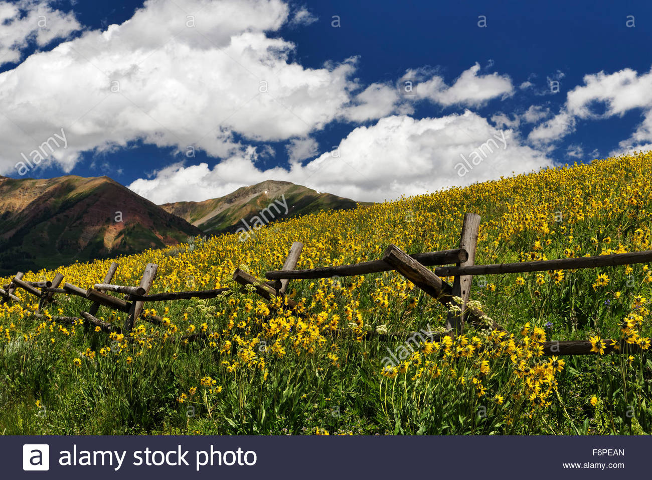 Old fence and wildflowers, Crested Butte, Colorado - Stock Image
