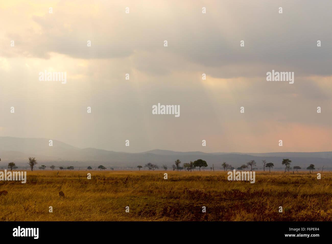 African Savannah, taken on Safari in mikumi national park. Sun rays are shining down. - Stock Image
