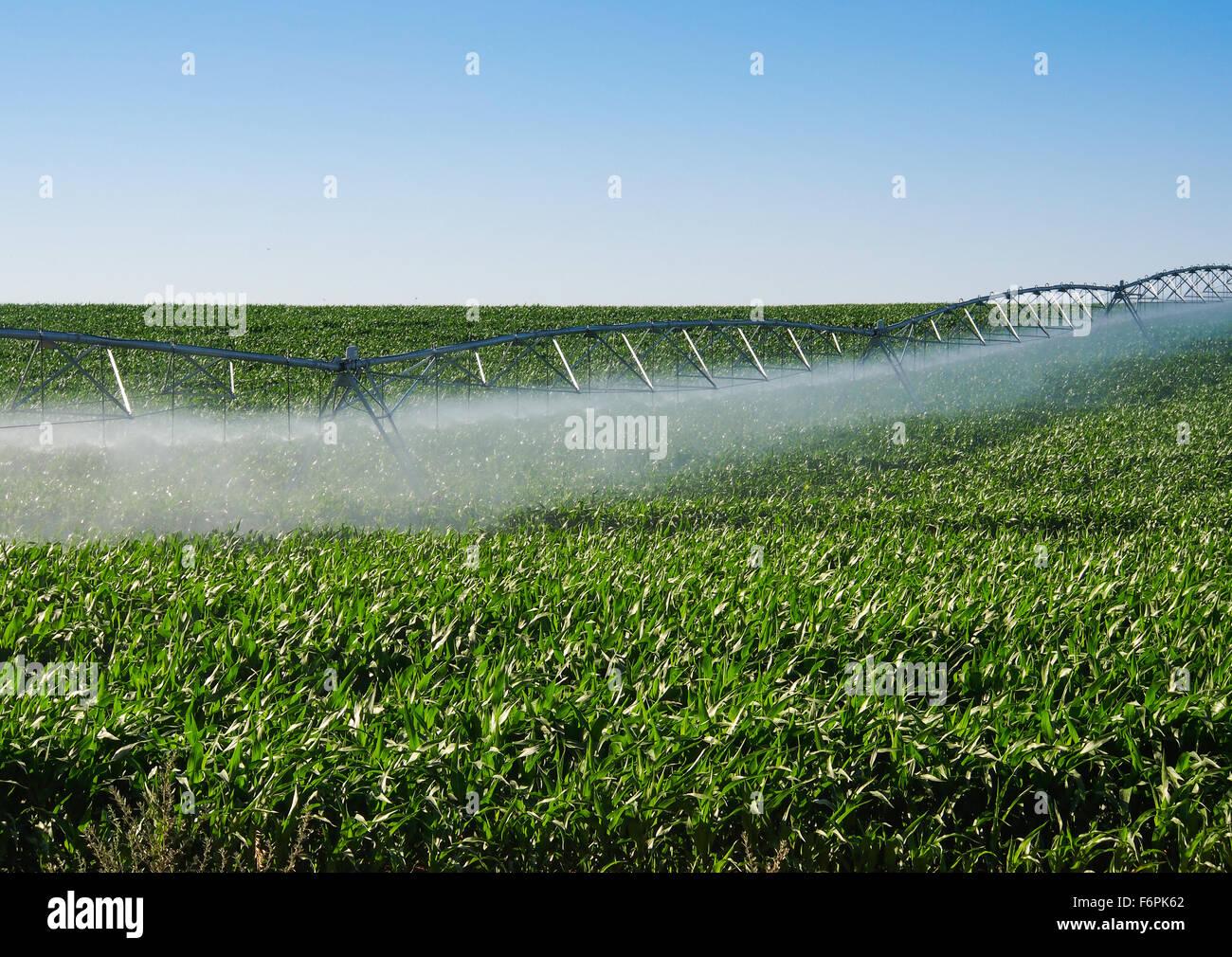 Irrigation pivot on a green field - Stock Image