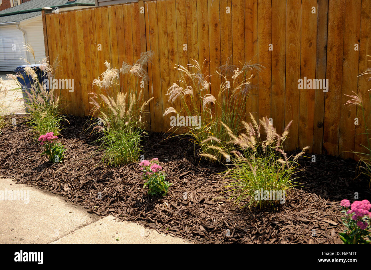Grasses and perennials newly planted - Stock Image