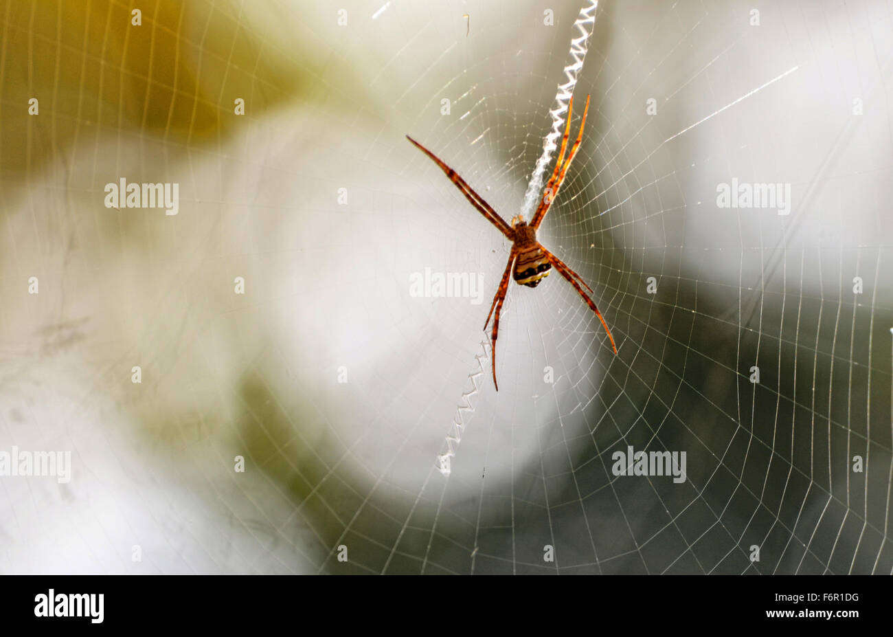 Sunlight falling on a well knit spider web - Stock Image