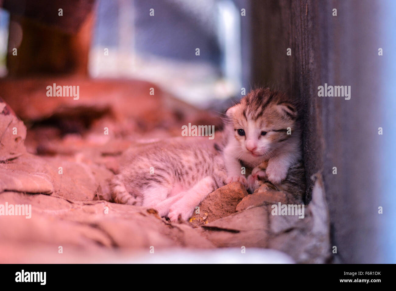 A blind sick and weak tabby kitten sitting by the wall looking for help - Stock Image