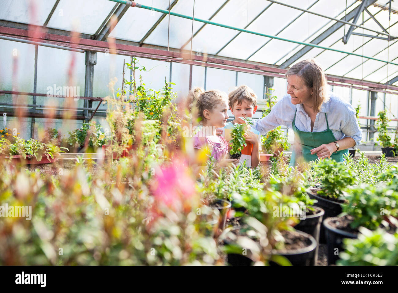 Female gardener and children in greenhouse - Stock Image