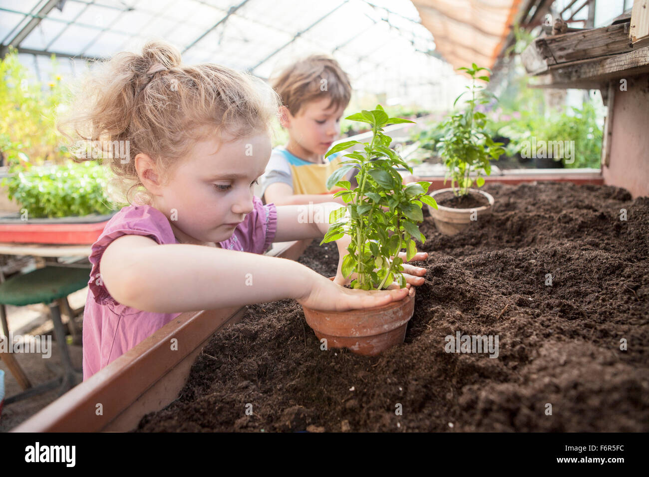 Two children in greenhouse planting plants - Stock Image