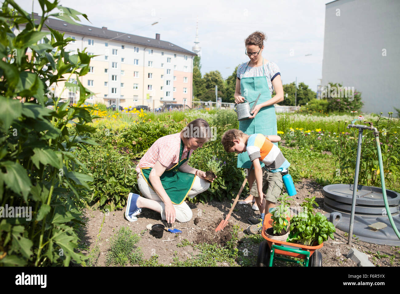 Family working together in vegetable garden - Stock Image