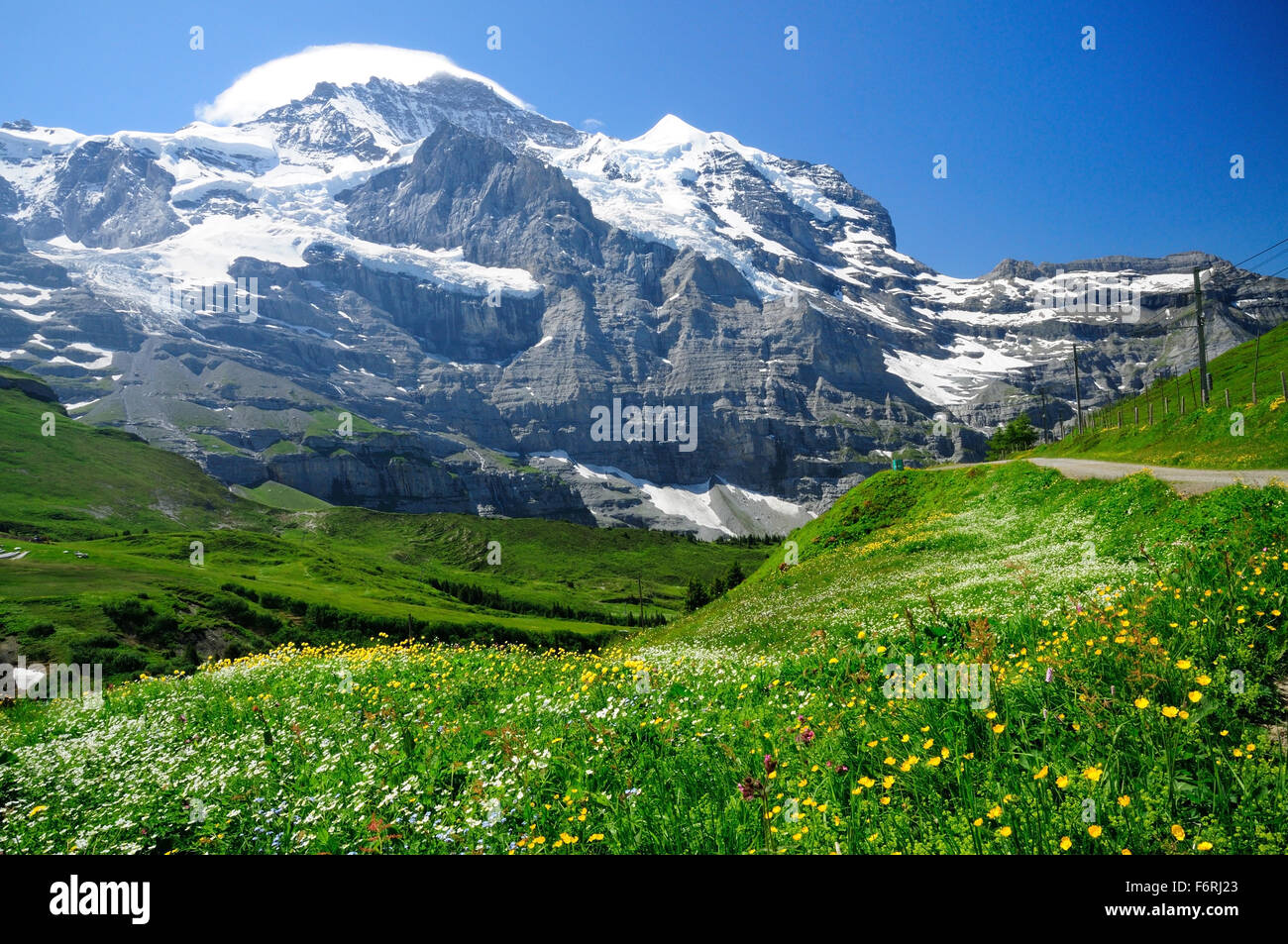 A dome shaped cloud covers the summit of the Jungfrau, seen from the wildflower meadows near Kleine Scheidegg. - Stock Image