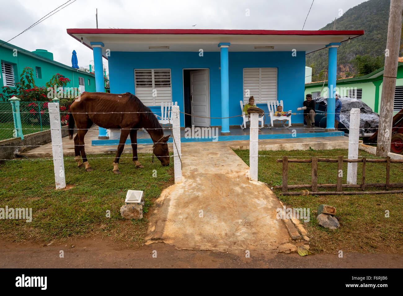 blue private home with a horse in the front yard, Viñales, Cuba, Pinar del Río, Cuba - Stock Image