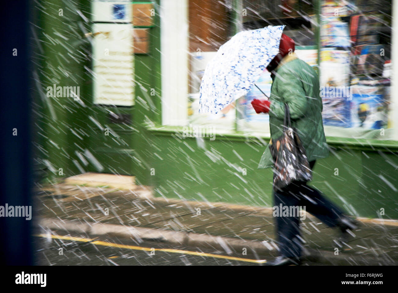 Snowing woman walking in snow bad weather using umbrella wind blowing gale UK England winter - Stock Image