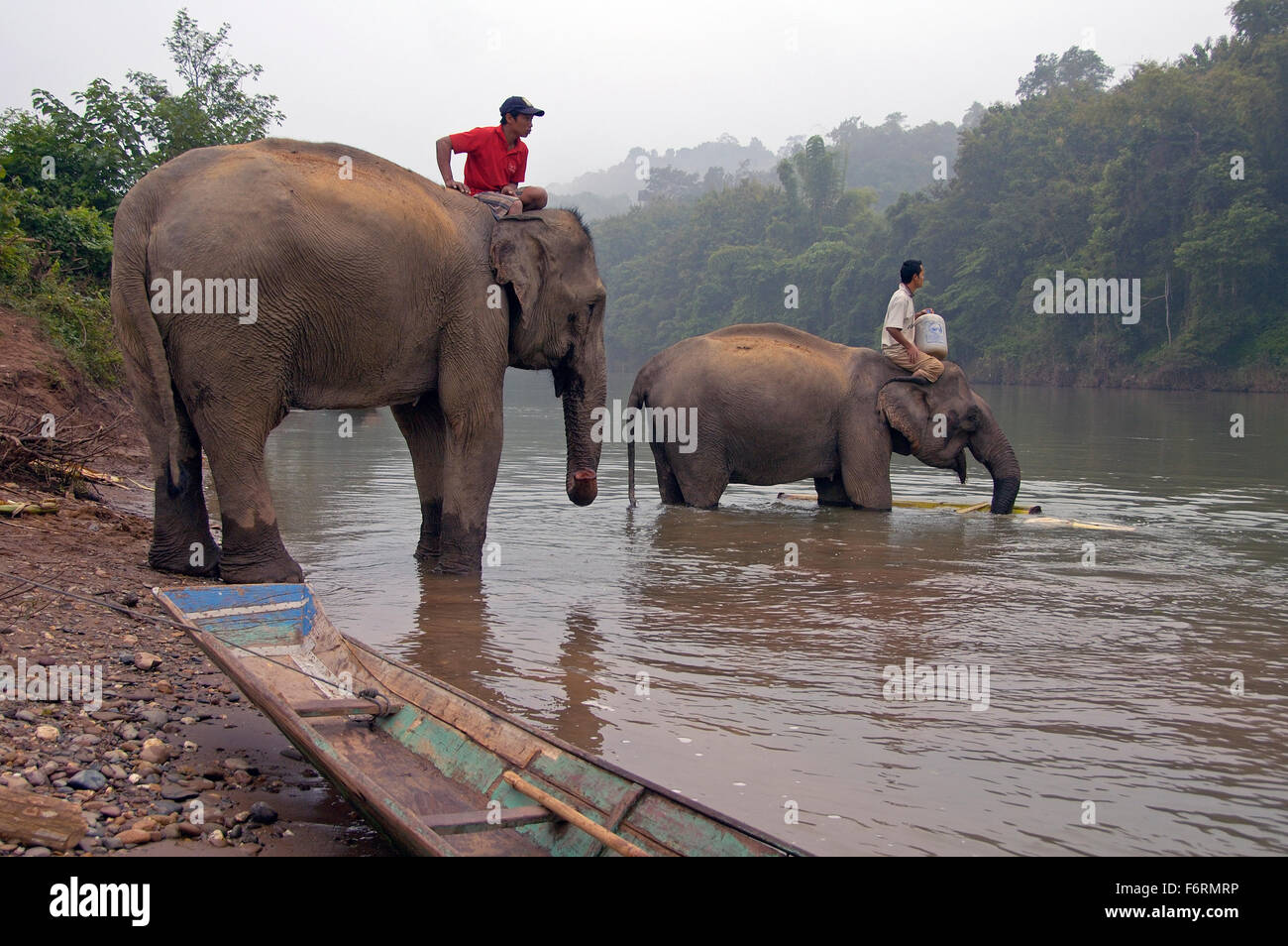 Man on top of an elephant in the Mekong river to wash the mammal Stock Photo