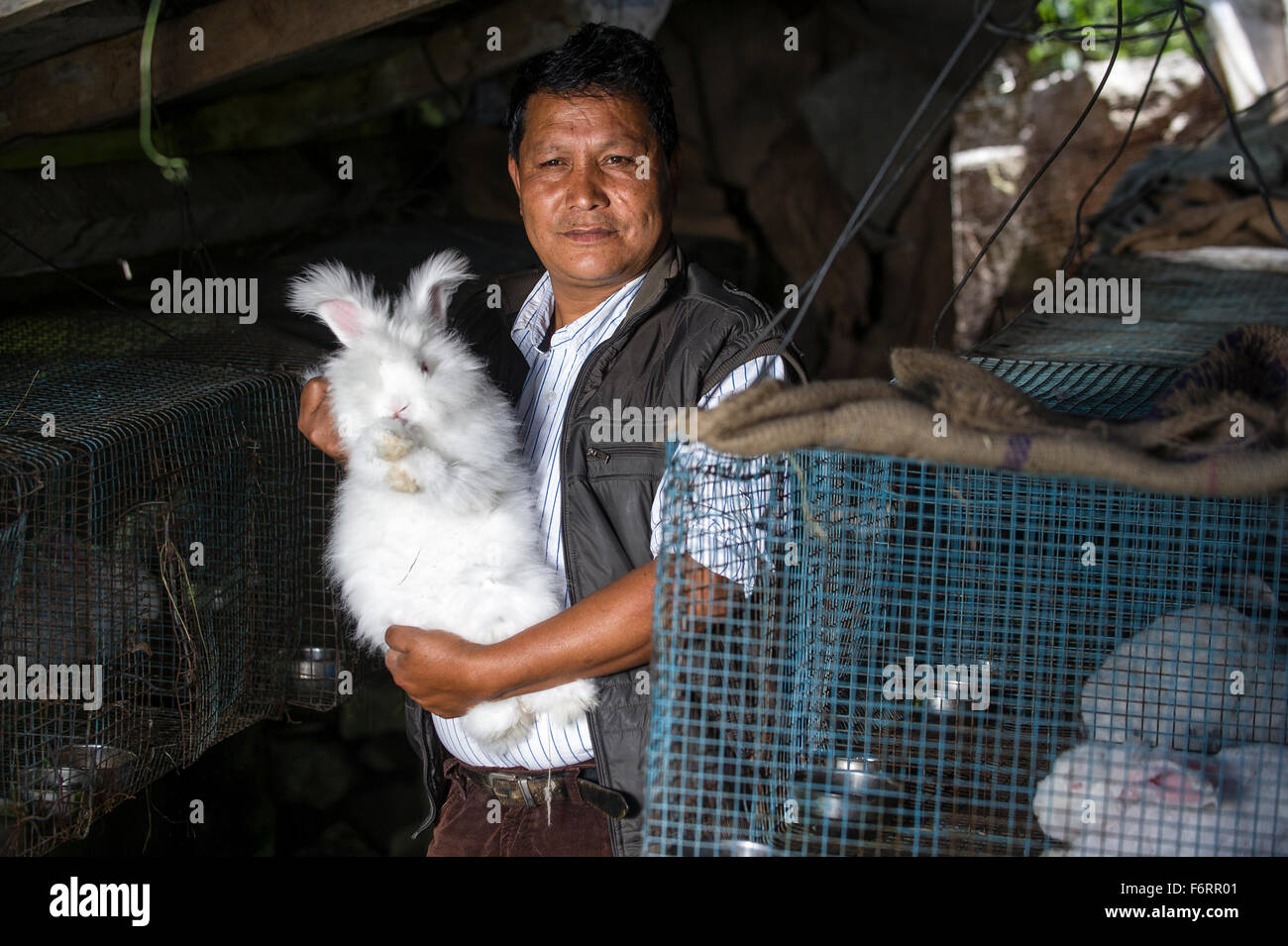 A man holds up one of his Angora rabbits in the Himalayan town of Munsiyari  in Northern India. - Stock Image