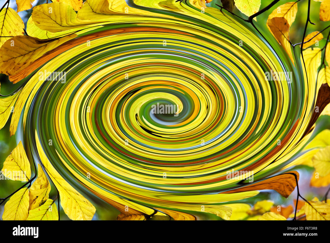 Swirling Beech leaves -  Abstract Autumn - Fagus sylvatica - Stock Image