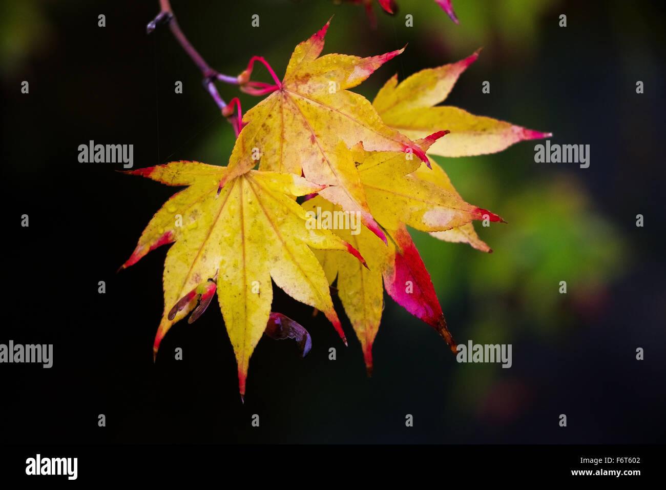 Leaf - Stock Image