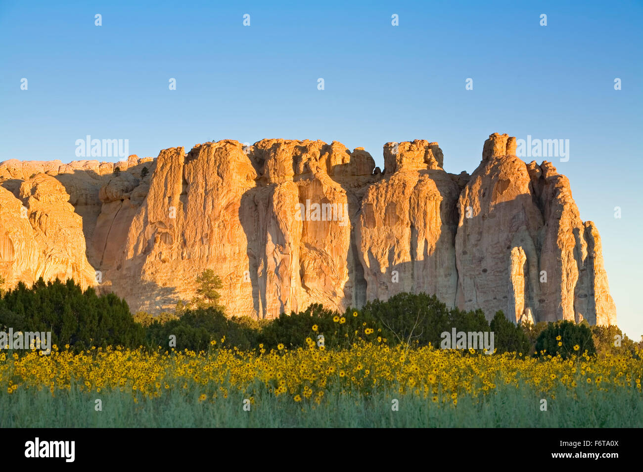 Colorado plateau new mexico stock photos colorado plateau new yellow wildflowers and inscription rock el morro national monument new mexico usa stock publicscrutiny Images
