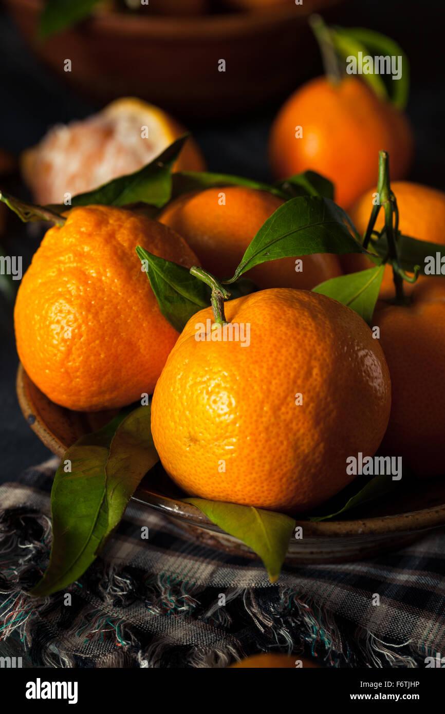 Raw Organic Satsuma Oranges with Green Leaves - Stock Image