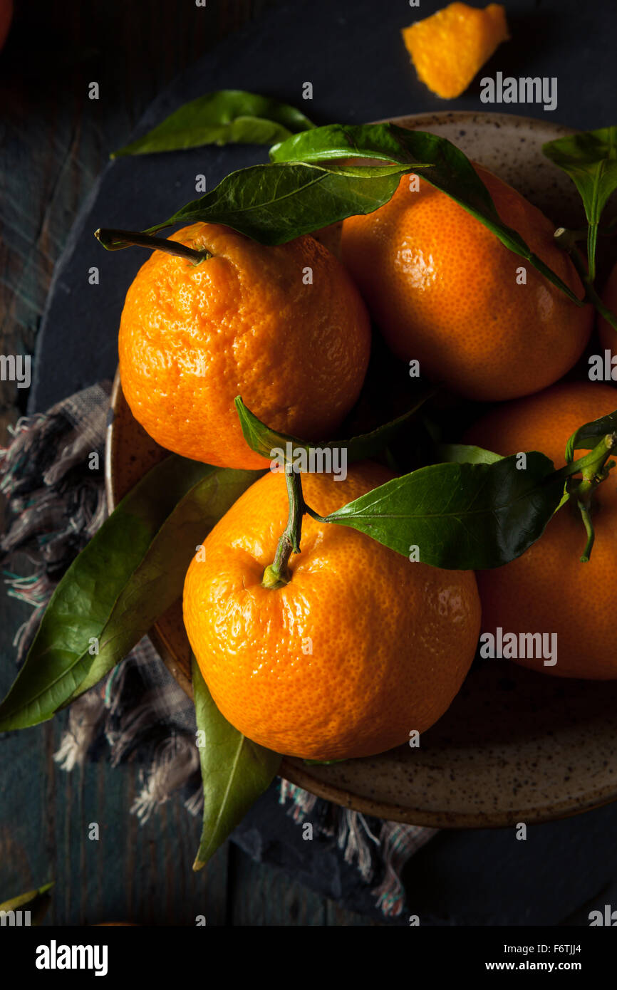 Raw Organic Satsuma Oranges with Green Leaves - Stock Image