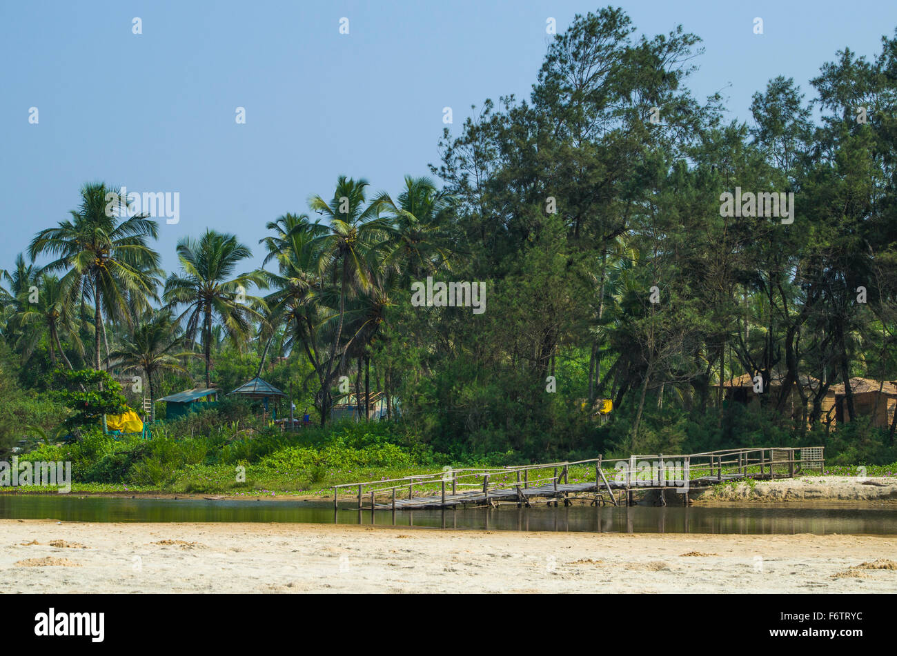 Landscape India  palm grove - Stock Image