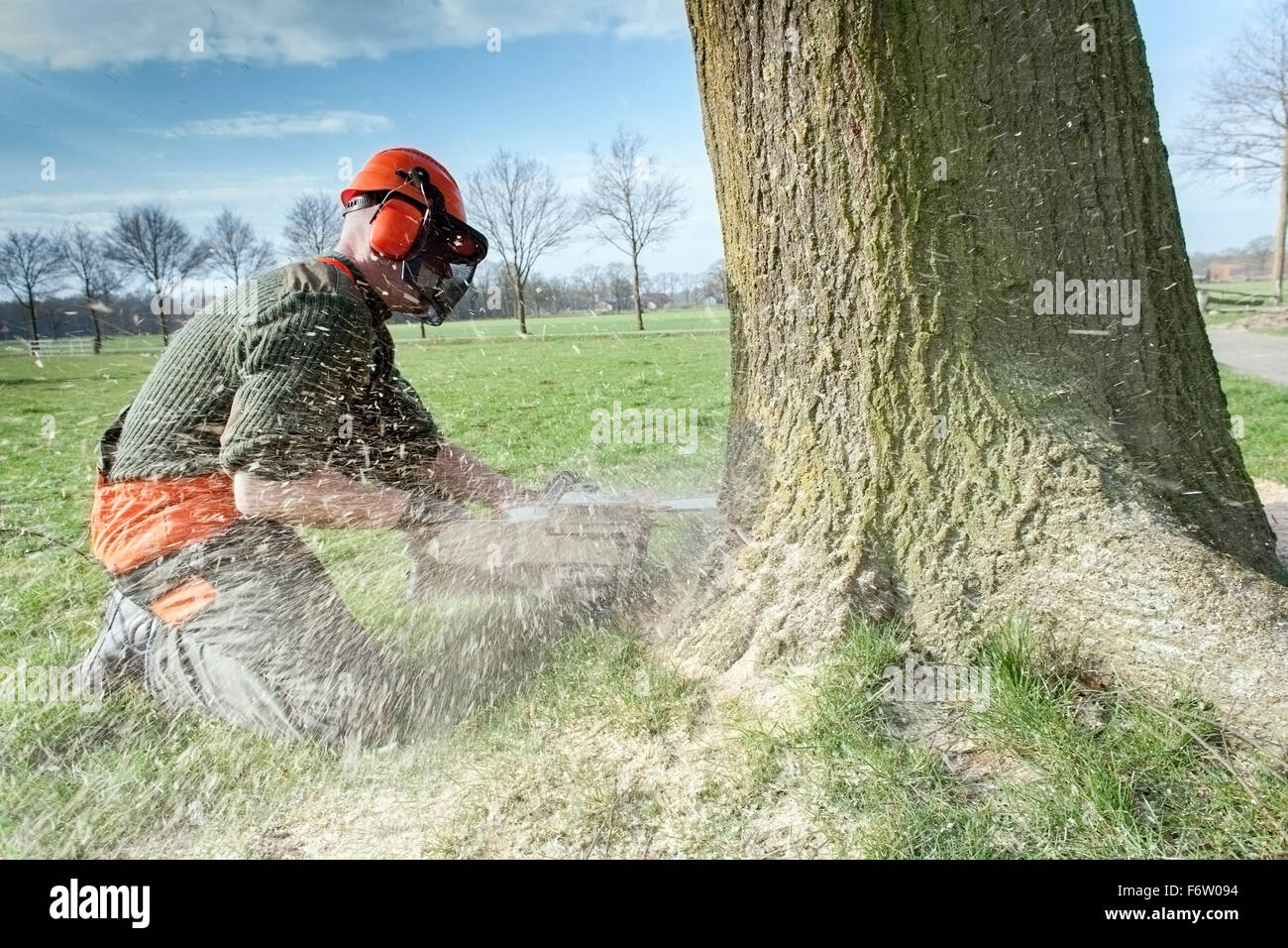 Lumberjack felling tree - Stock Image