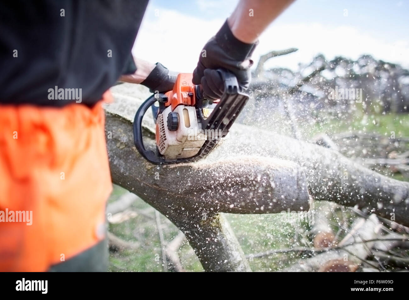 Lumberjack sawing tree trunk - Stock Image