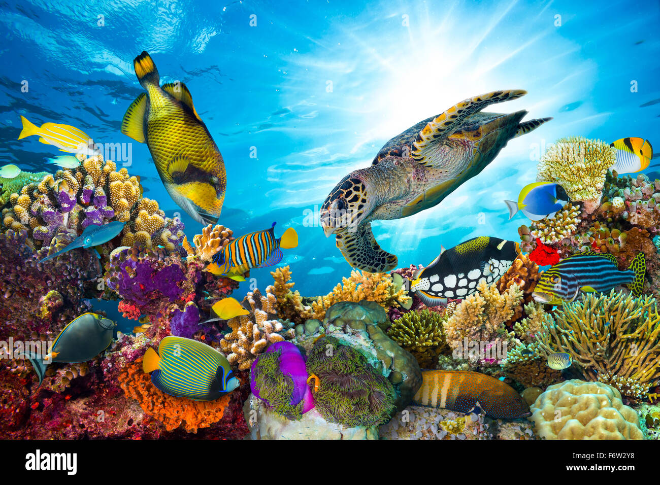 colorful coral reef with many fishes and sea turtle - Stock Image