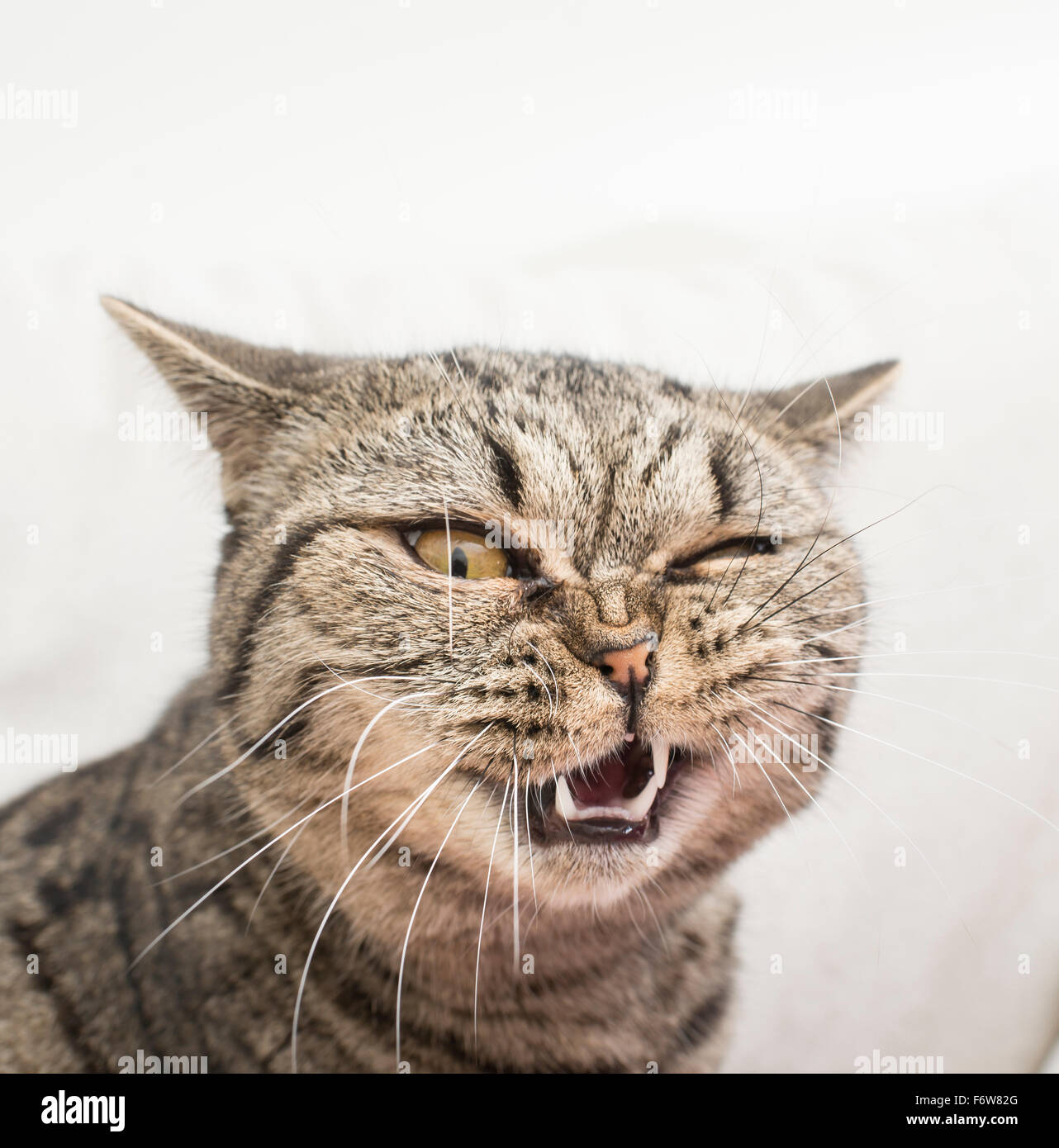 Cat with funny and crazy expression. Face of shock and disgust. - Stock Image